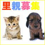 薩摩川内市 子犬・子猫の里親募集