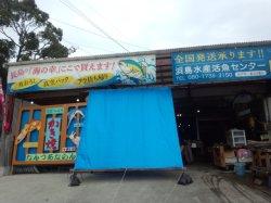 画像1: 浜島水産 活魚センター | 長島町 海の幸 卸 販売 かき小屋